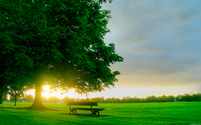 sun_rise_in_the_park-1280x800
